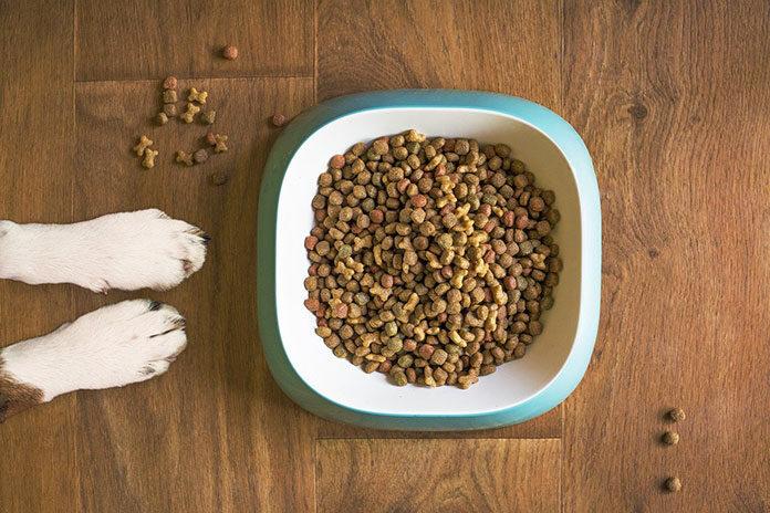 Jaką mokrą karmę wybrać dla psa