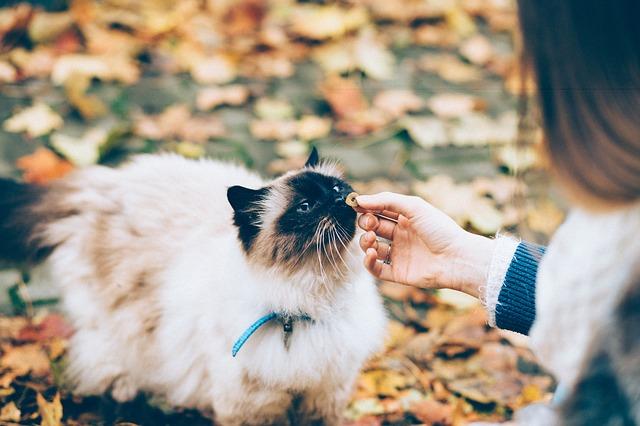 przysmak dla kota
